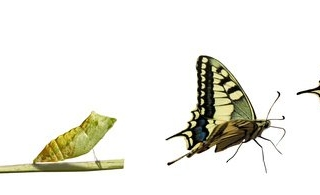 Caterpillar to Butterfly - Lifecycle